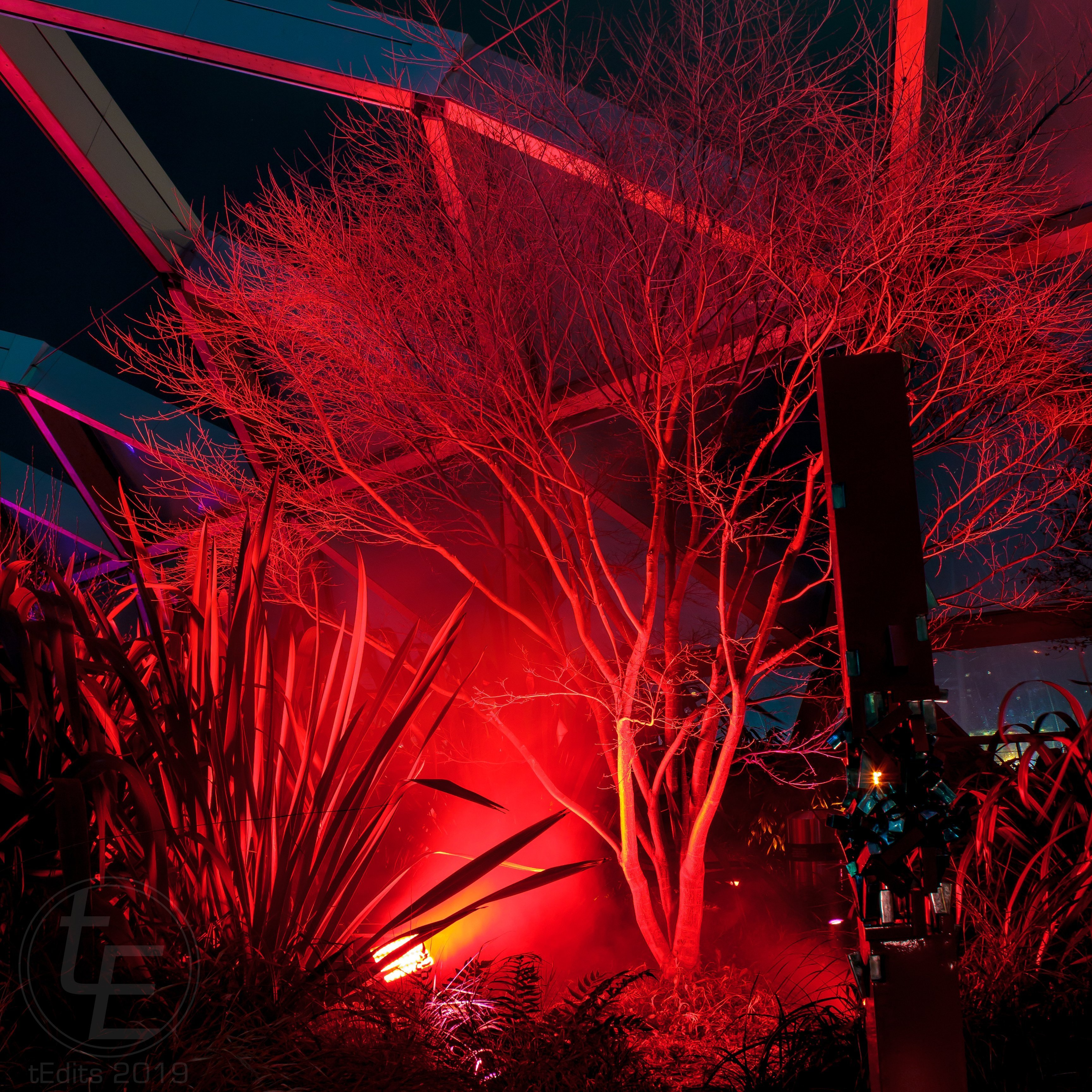 Canary Wharf Winter Lights 2019 - Enchanted Connections, Tine Bech Studio