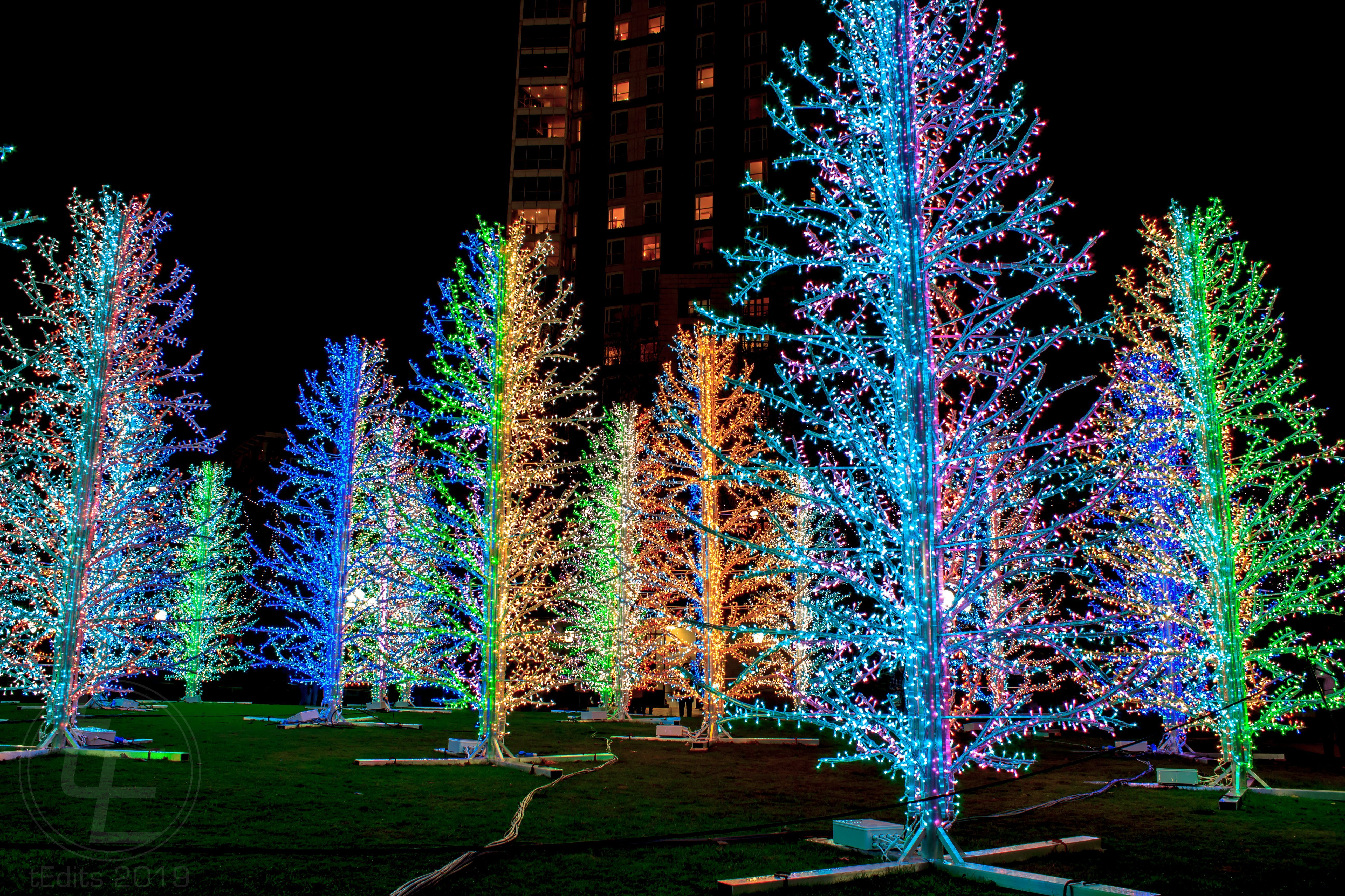 Canary Wharf Winter Lights 2019 - Sasha Trees, Adam Decolight