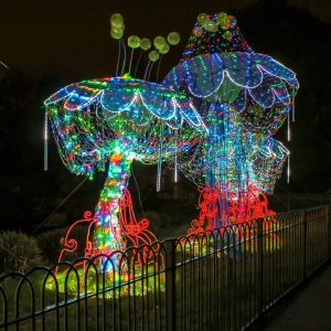 Magic Lantern Festival 2016 | Mushrooms